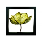 "14"" Framed Tulip Wall Art"